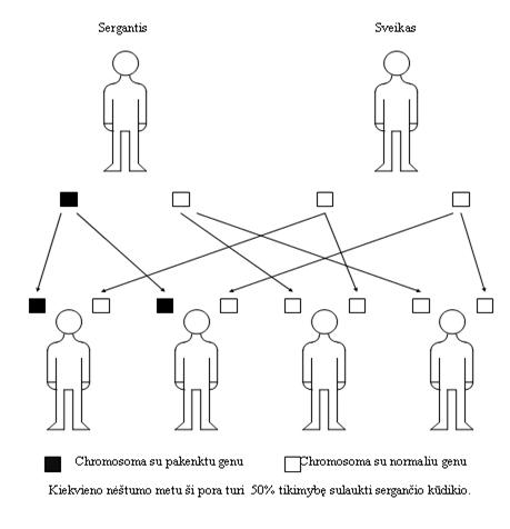 hipertenziją žmonėms lemia dominuojantis autosominis genas)